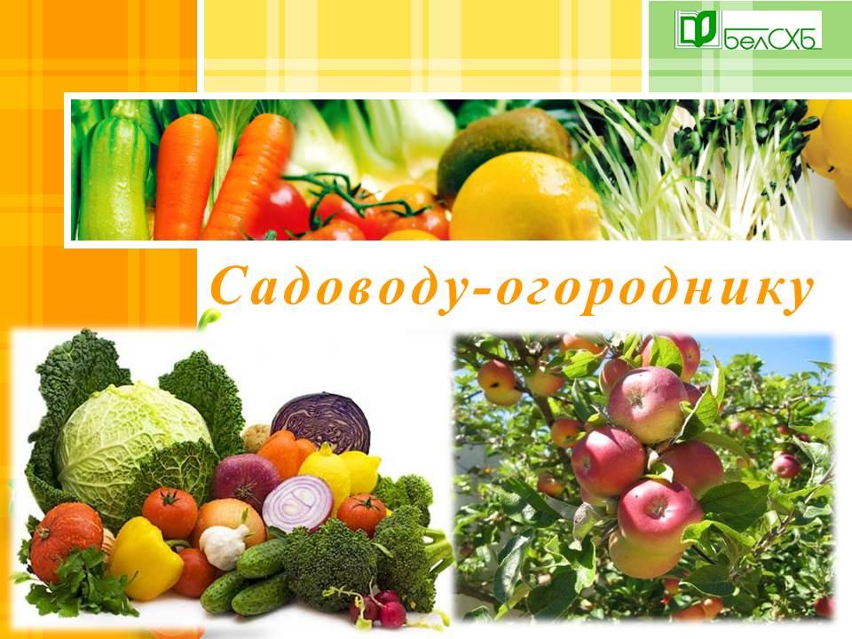 Сценарий овощевод